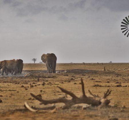 Explore Kenya By Rail